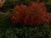 растение у истока реки Пслух